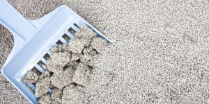 فروش بنتونیت خاک گربه