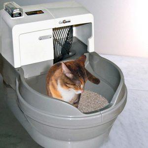 خریدبنتونيت خاک گربه